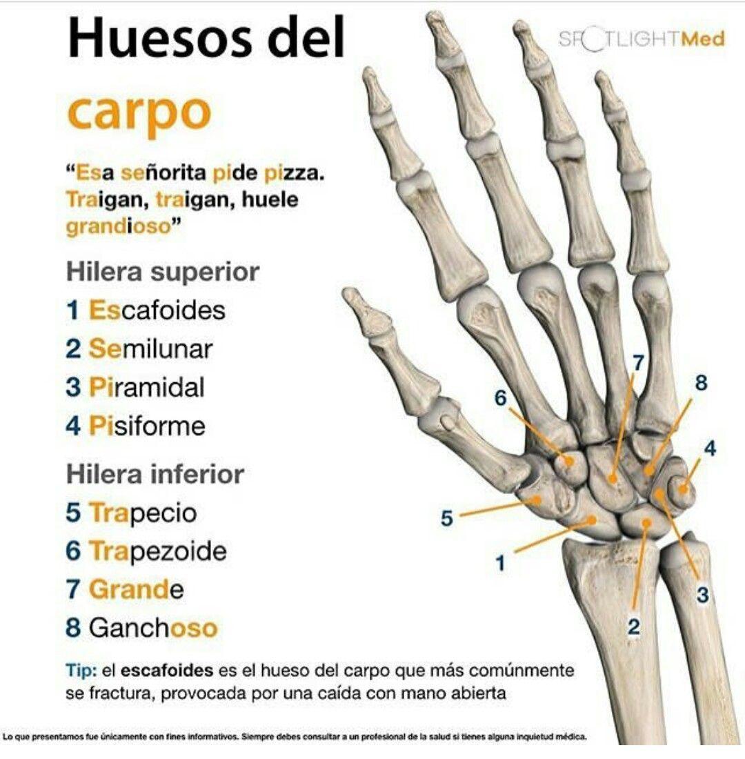 Huesos del carpo | Salud | Pinterest | Medicine, Medical and Medical ...