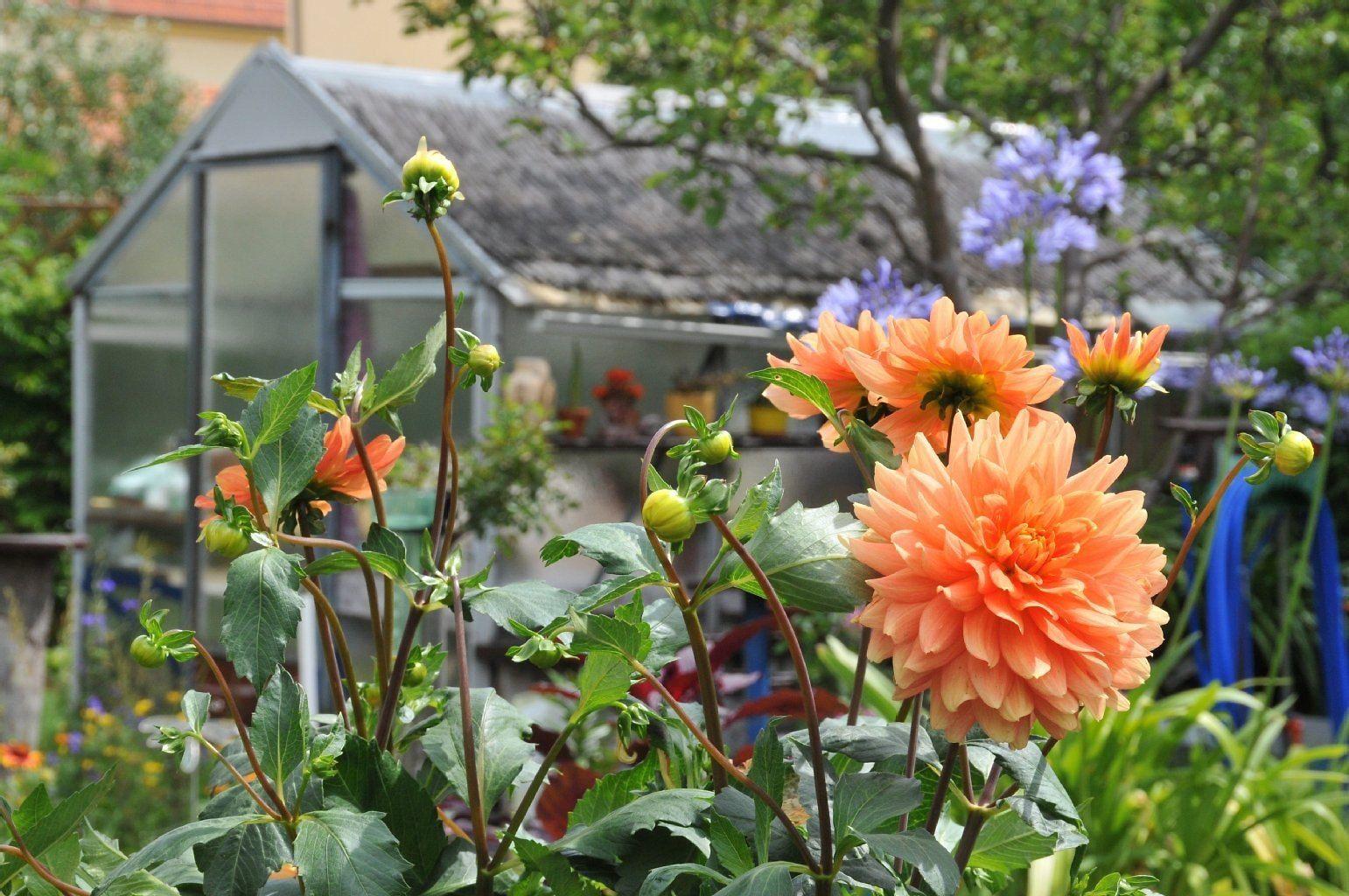 Garten In Eisenhuttenstadt Zu Verschenken Das Sind Instant Mood Boosters Von Kleingarten Die Laube Ist Leer Berliner Zeitu Garten Kleiner Garten Verschenken