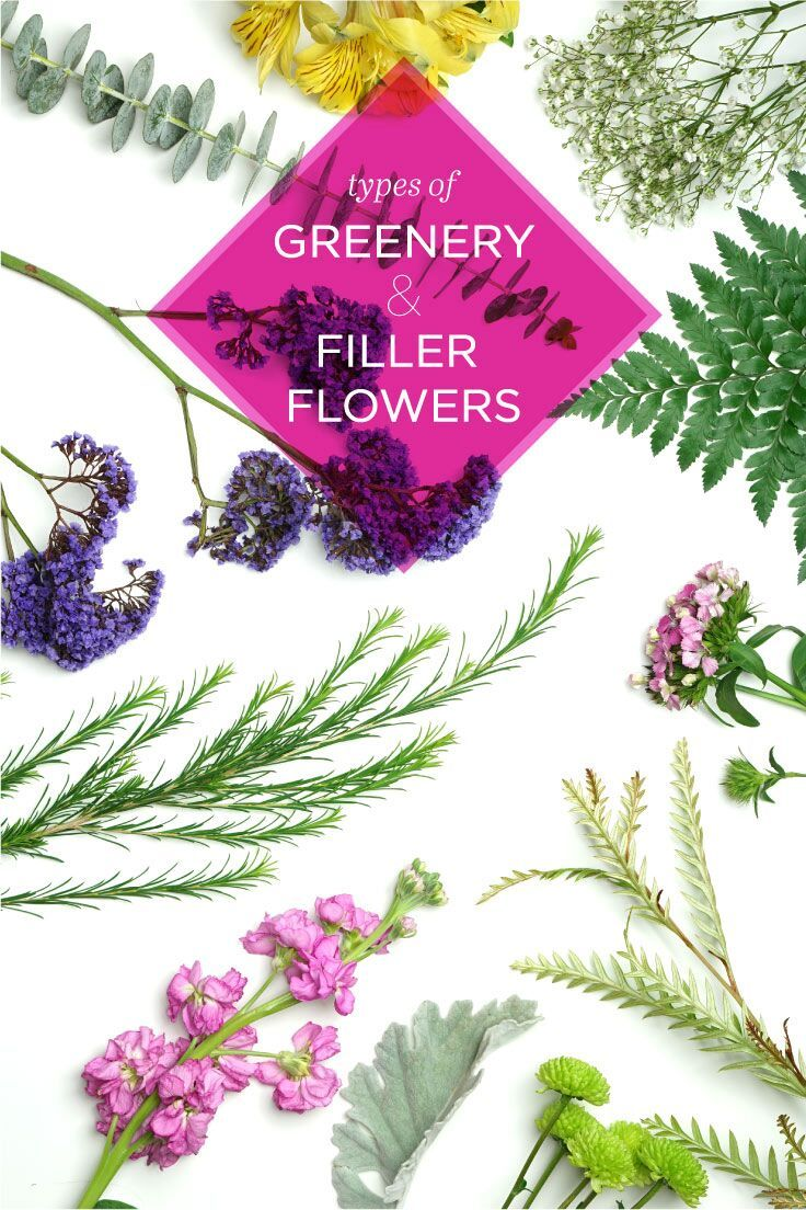 20 Types of Greenery and Filler Flowers   Flower