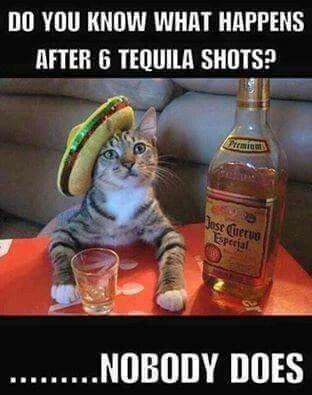 Tequila cat always cracks me up #tequila #meme #funny #haha #humor ...