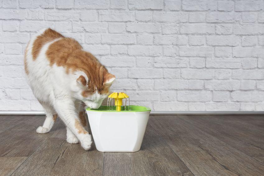 Best Cat Fountain Of 2019 Cat Fountain Cool Cats Best Cat
