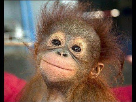 Risultato immagini per orango buona domenica gif glitter