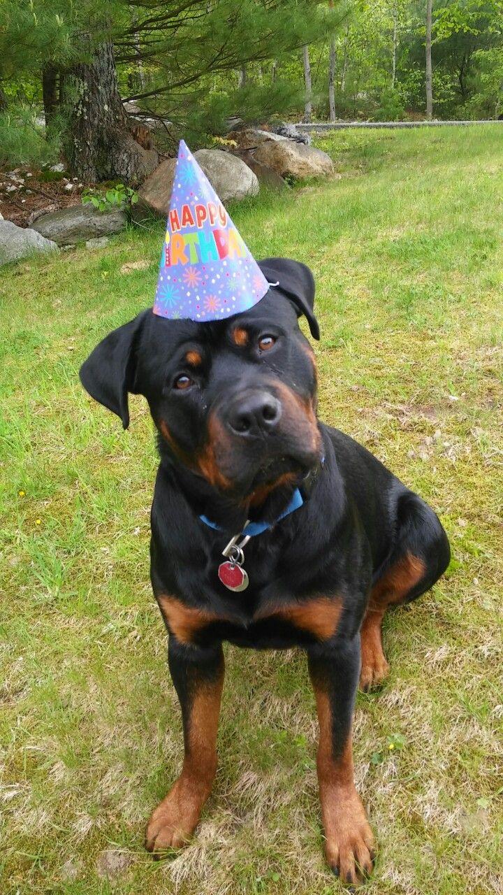 Rottweilers First Birthday Rottweiler Rotweiler Puppies
