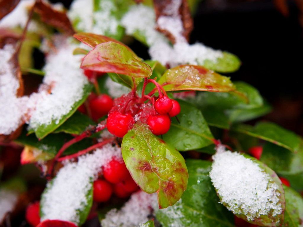 Winterharte Kübelpflanzen: Unsere Top 15 - Plantura