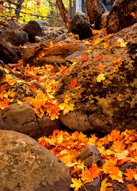 Travel Planning: Sedona  |Sedona Fall Scene