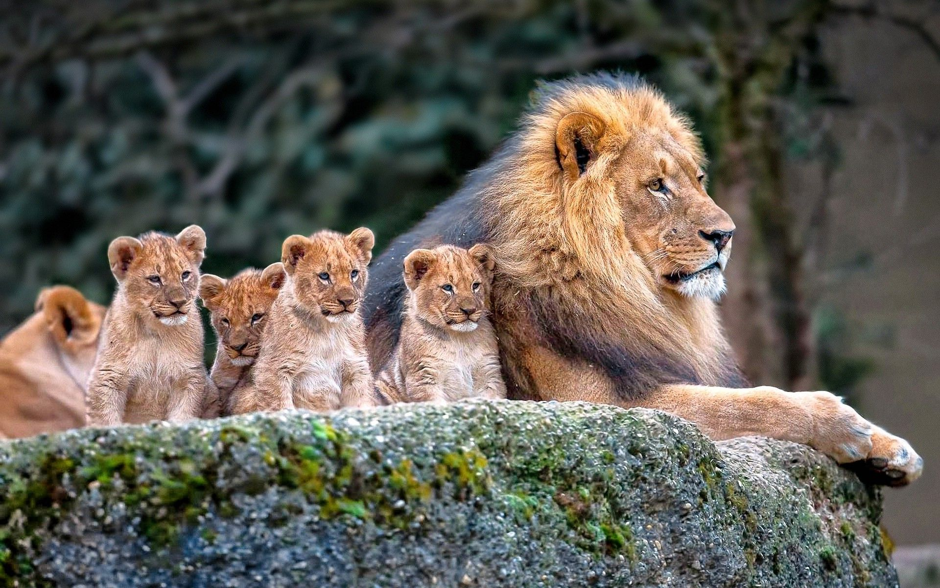 Image Result For Nature Animals Baby Animal Videos Lion Family Animals Beautiful