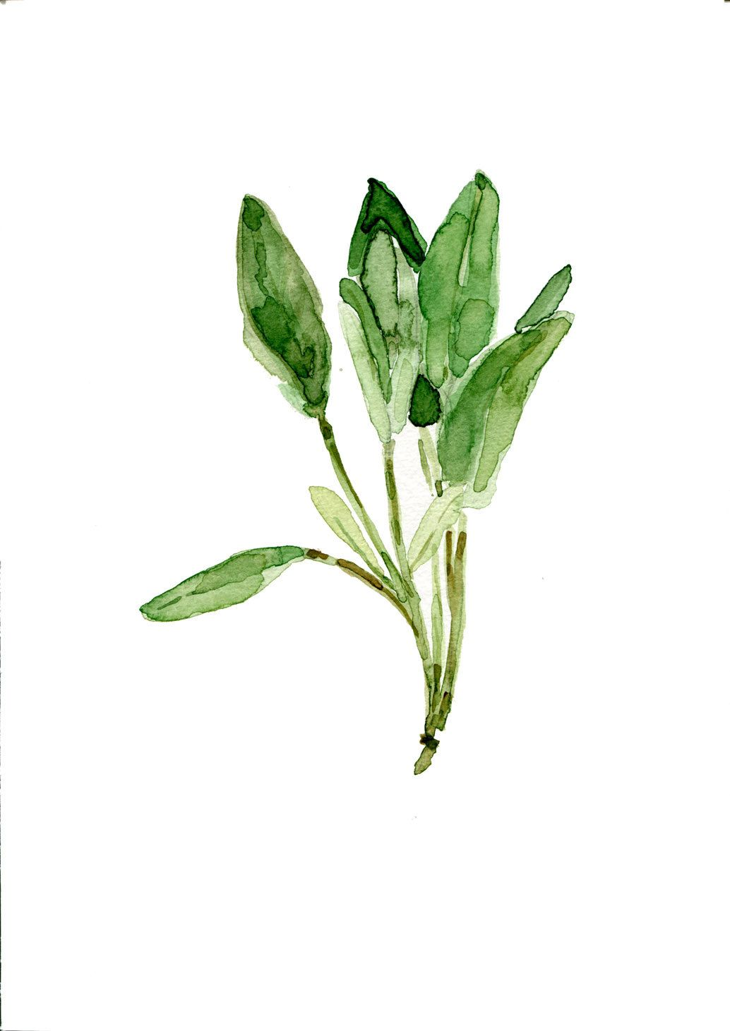Sage Leaves Original Watercolor Painting Herb Botanical Green