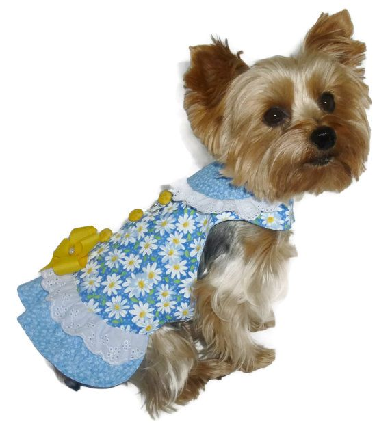 Dog Clothes Sewing Pattern 1708 Little Missy Dog by SofiandFriends ...