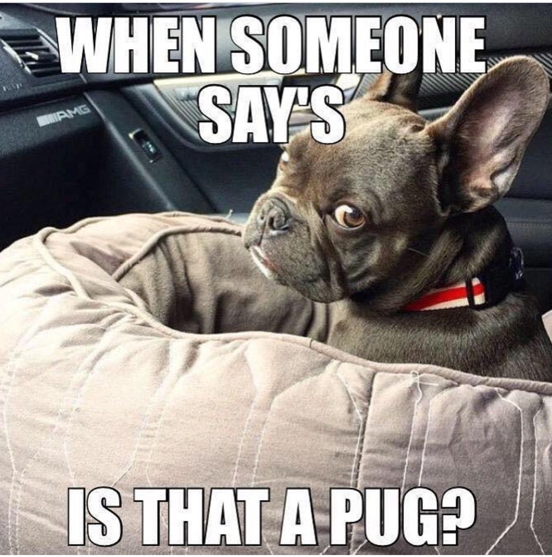 Pin By Paula Siekiera On Frenchie Luv French Bulldog Meme Frenchie Bulldog Cute French Bulldog