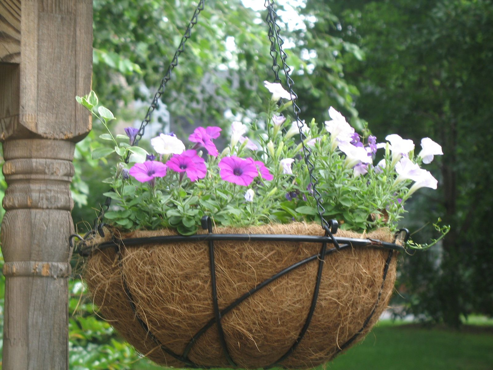 Pin By Machelle Shih On Designs And Decors Hanging Basket Garden Fiber Hanging Hanging Baskets