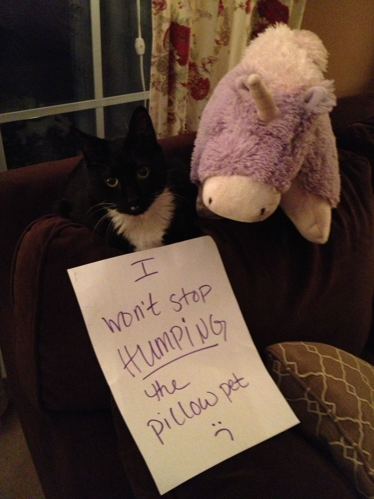 40 Guilty Cats Who Deserve To Be Shamed Publicly Cat Shaming Funny Cat Memes Cat Memes