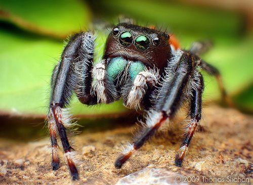 Yuputka (Ulwa, Nicaragua)  Similar to the creepy crawlies, this word