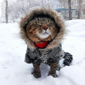 cat in the snow wearing a coat