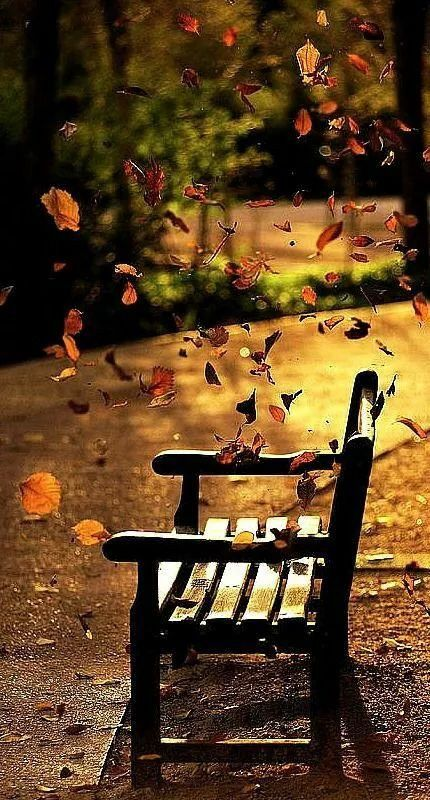 I would like to be sitting on this bench enjoying this moment. I love fall of the year.