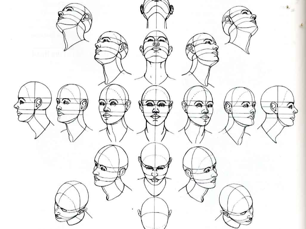 Right Brain Draw Sphere Form Of The Human Head At Various Angles