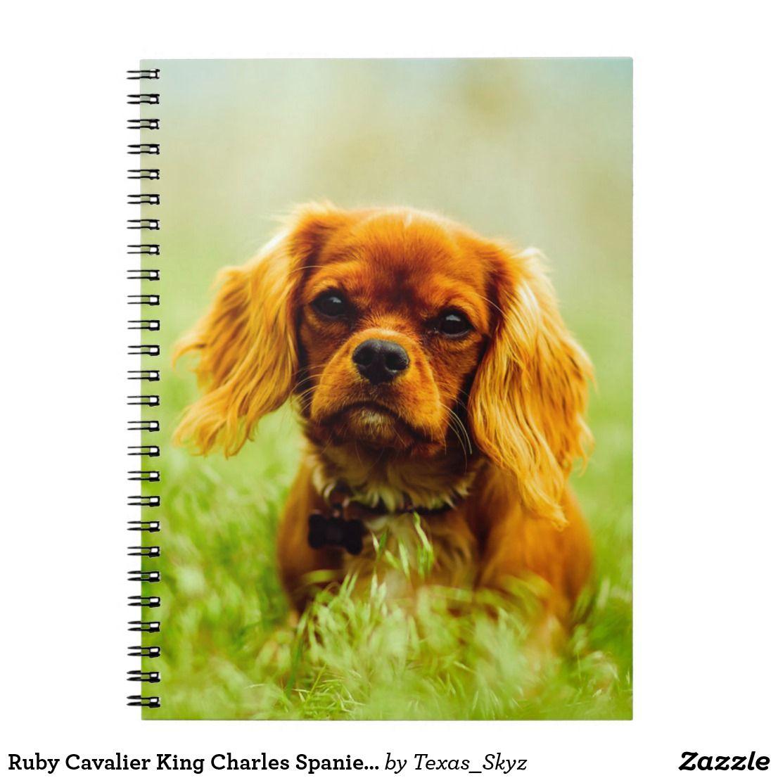 Ruby Cavalier King Charles Spaniel Puppy Dog Notebook Zazzle Com In 2020 King Charles Cavalier Spaniel Puppy Ruby Cavalier King Charles Spaniel Puppy Cavalier King Charles Spaniel