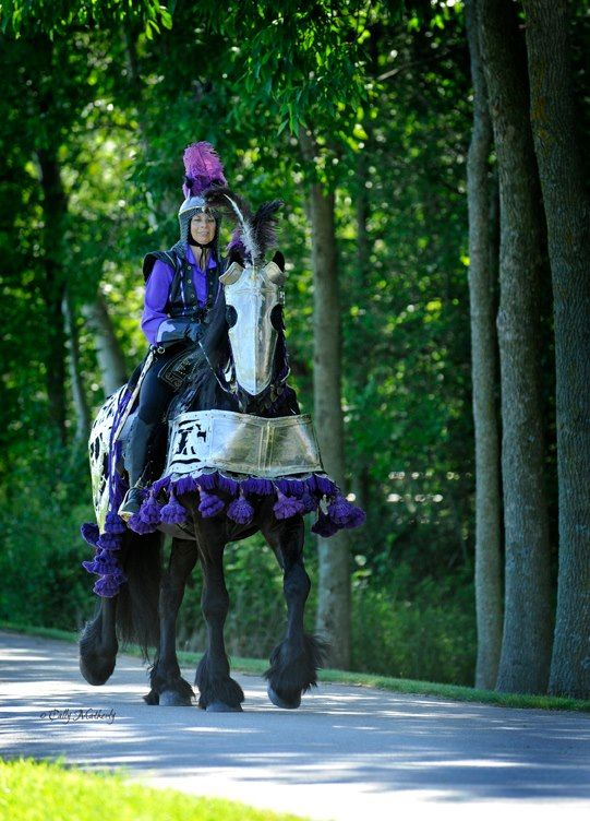 Starry Knight Friesians Located In Algoma Wisconsin Photography