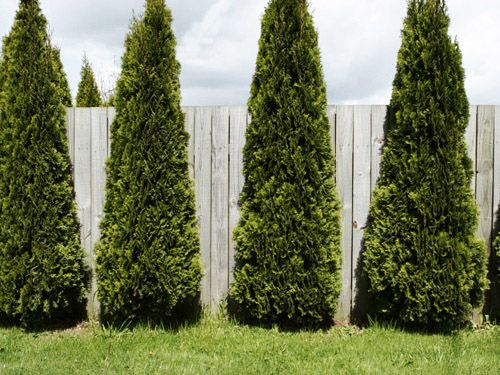 5 Landscaping Ideas To Increase Backyard Privacy #privacy #landscaping