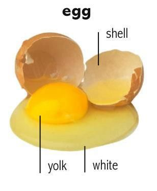 Learn the words for the different parts of an egg in English ...