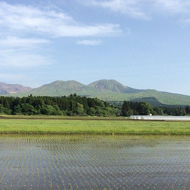 田植えの終わった水田が美しい大好きな日本の風景:阿蘇(熊本)