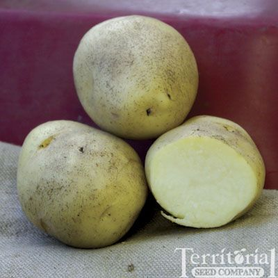 Kennebec PotatoesOrganic