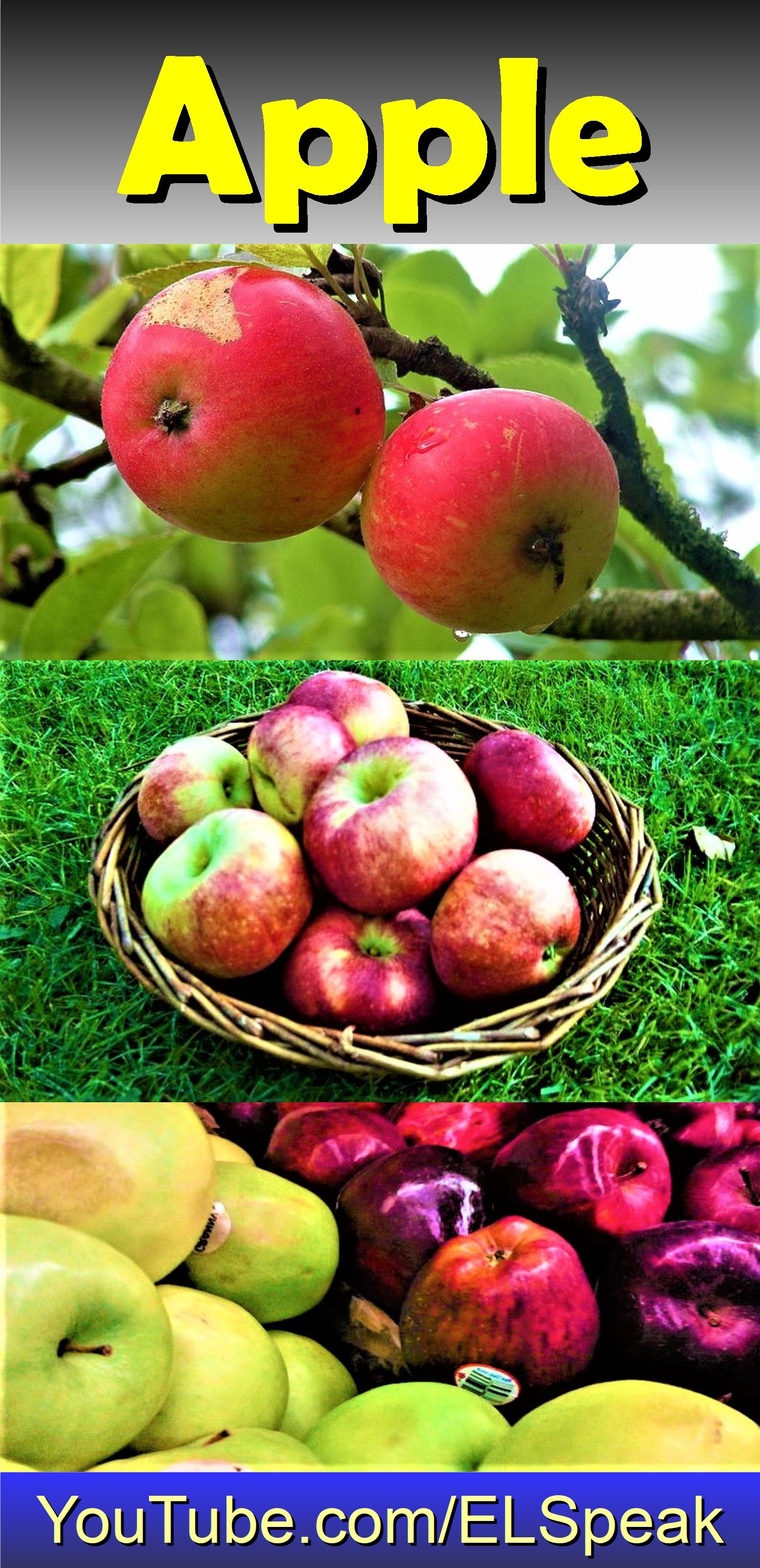 Apple Malus Domestica Is An Edible Pomegranate Fruit Other Apple Trees Species Of The Genus Malus Or Hybrids Of That Apples Can Be Red Yellow Or Green