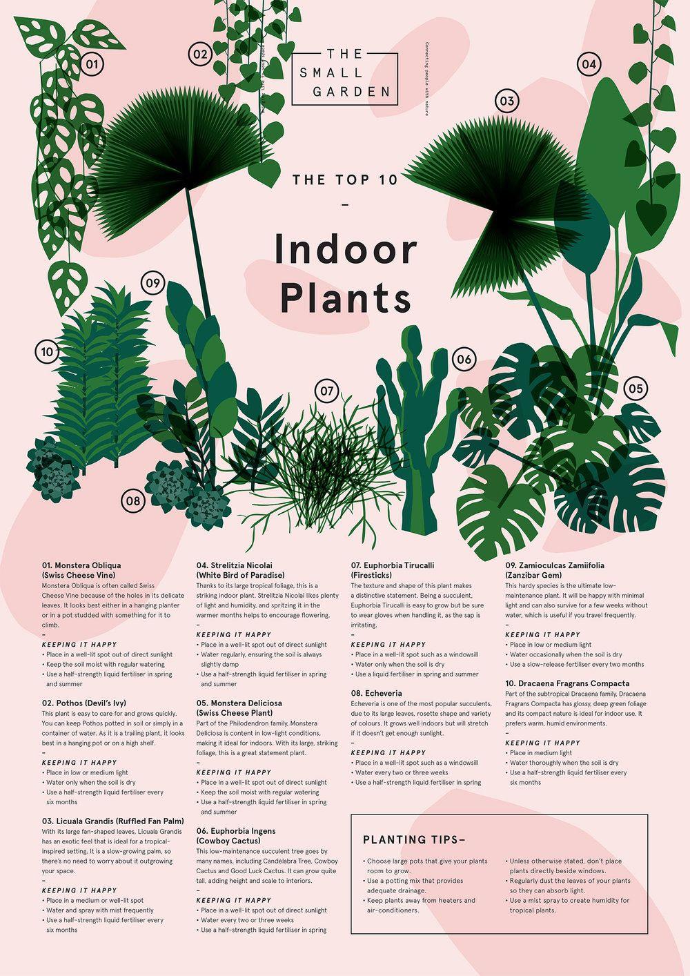 TSG Top Ten Indoor Plants