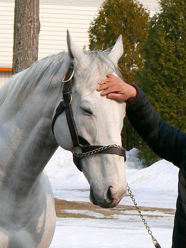 ゆぅ@アカウント移行 on Twitter | Pretty horses, Pretty animals ...