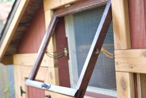 Should Chicken Coops have Windows?