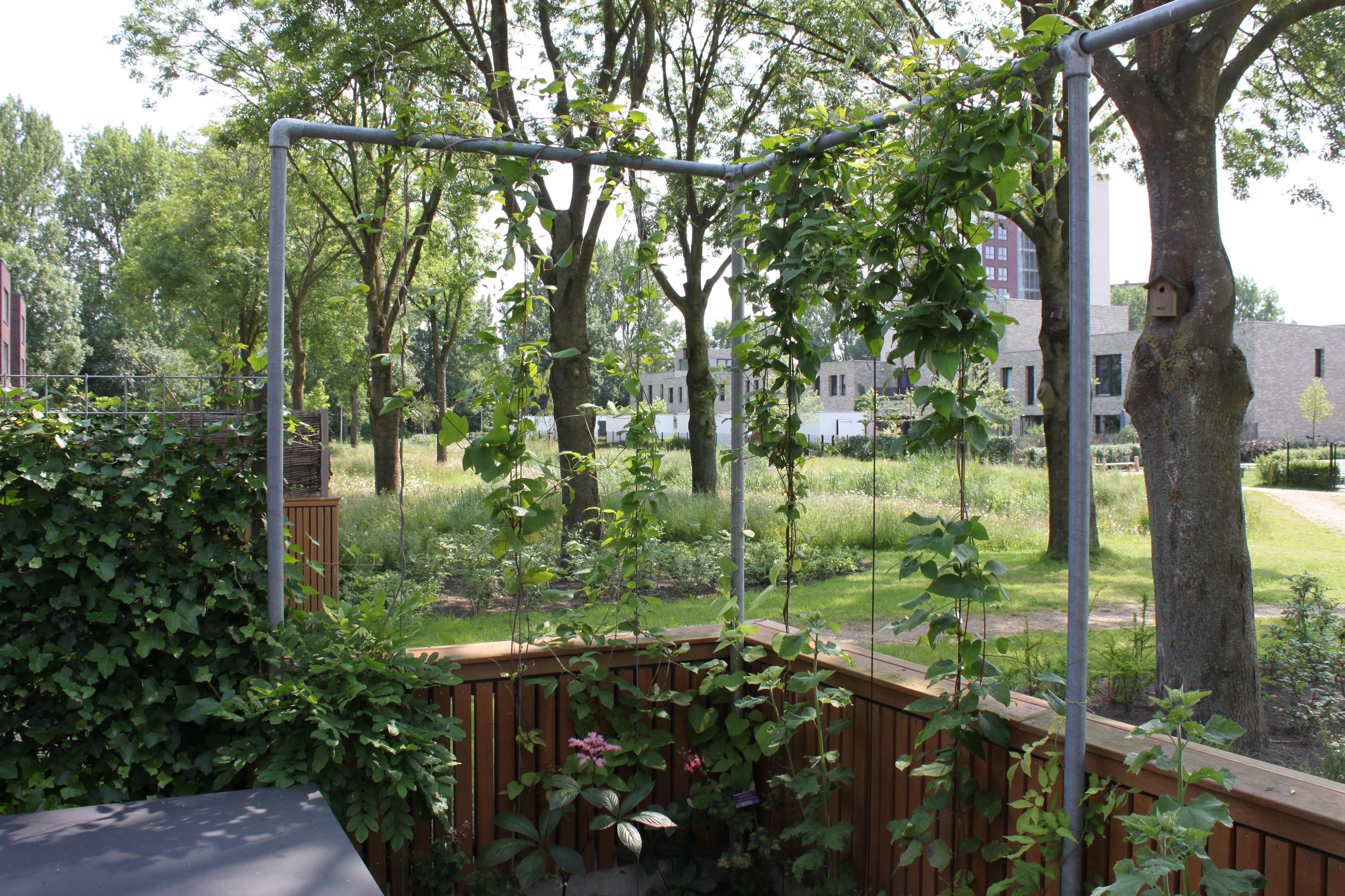 Strak speels stoere materialen tuinseizoentuinseizoen for Tuinontwerp eetbare tuin