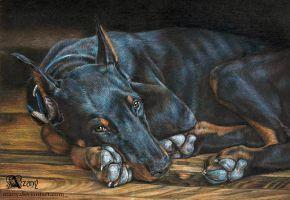 Doberman: black on black by Azany