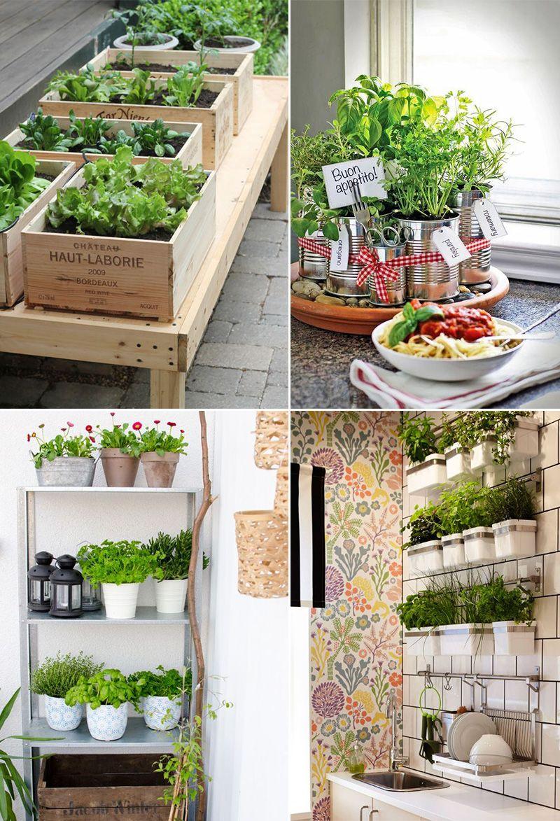 Coltivare In Casa Piante Aromatiche come coltivare erbe aromatiche in casa | giardino di erbe