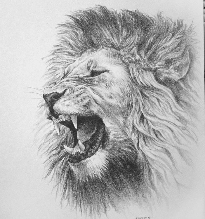 Awesome Drawings Of Lions Roaring Lion Pencil Drawing On ...