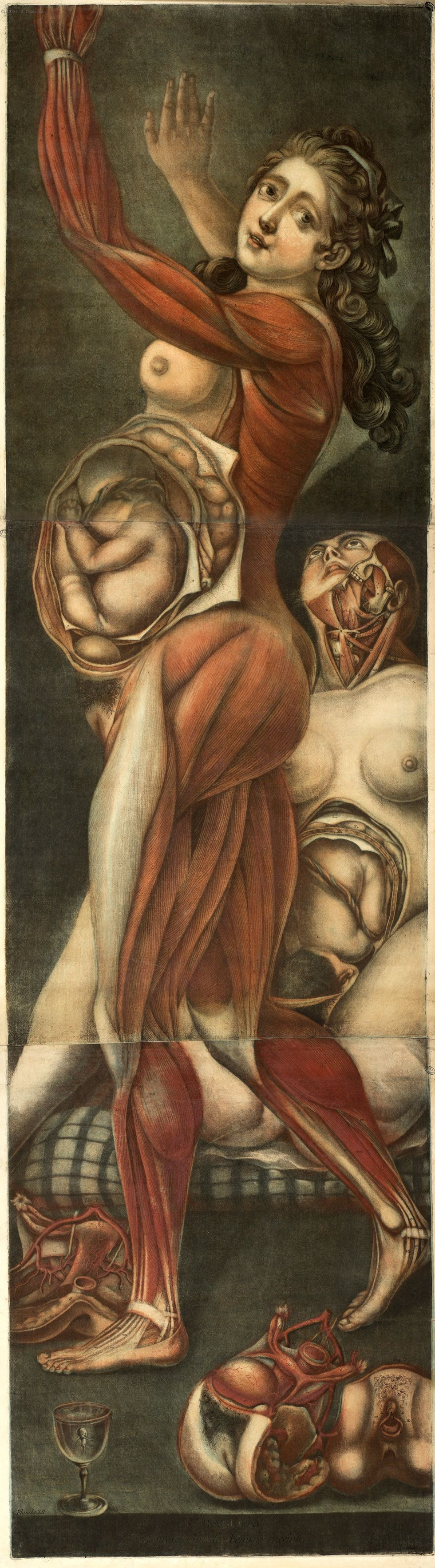 """""""Femme enceinte, de profil, avec muscles partiellement apparents et fœtus visible"""", Gautier d'Agoty (Jacques-Fabien), Recueil factice de planches séparées, XVIIIe, BIUM, Paris"""
