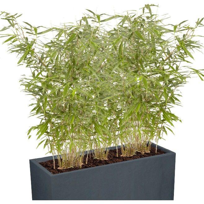 epingle sur haie bamboo brise vue
