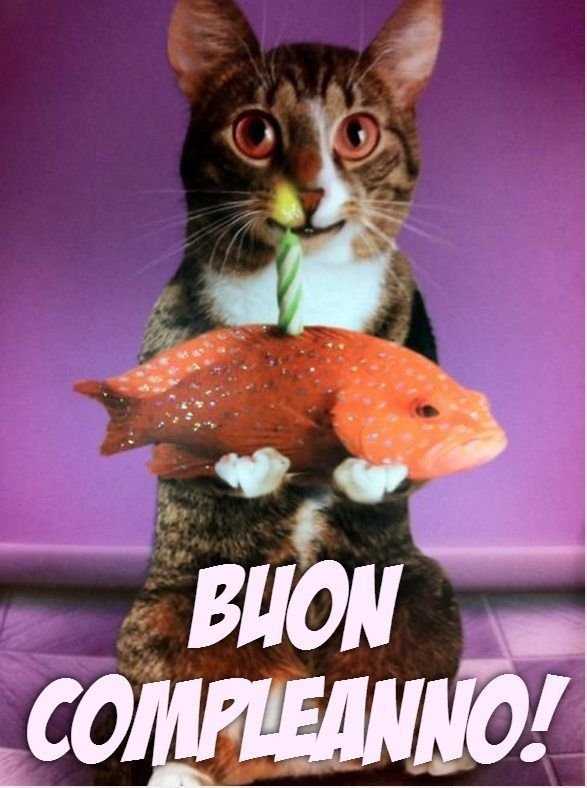 Immagini auguri con gatti | compleanno | Pinterest | Happy