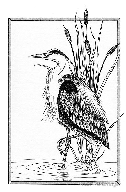 Great Blue Heron And Cattail Ink Illustration Metal Print By