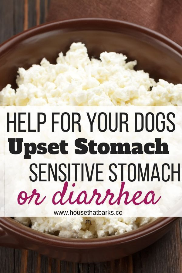 Upset Tummy And Diarrhea Recipe Dog Food Recipes Homemade Dog