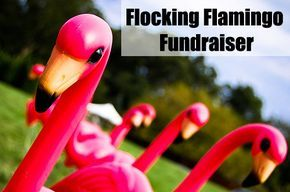 The Flamingo Fundraiser is a perfect Fundraising Idea for Kids! It's fun, creative, yet simple!