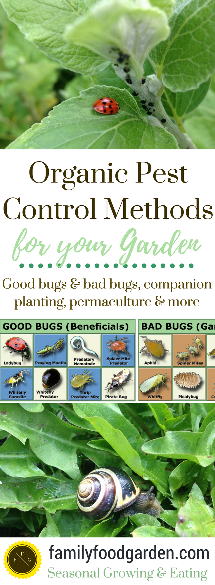 Organic Pest Control in your Garden Does organic pest-free gardening sound like an unattainable dream? To many gardeners it might, but achieving organic pest control is all about the working ecosystem. If your garden is not an ecosystem and just lovely rows of weeded monoculture crops, the bad bugs tend to thrive and be more of a nuisance. I've written a long post... Pest Control in your Garden Does organic pest-free gardening sound like an unattainable dream? To many gardeners it might, but achieving organic pest controlisall about the working ecosystem. If your garden is not an ecosystem and just lovely rows of weeded monoculture crops, the bad bugs tend to thrive and be more of a nuisance