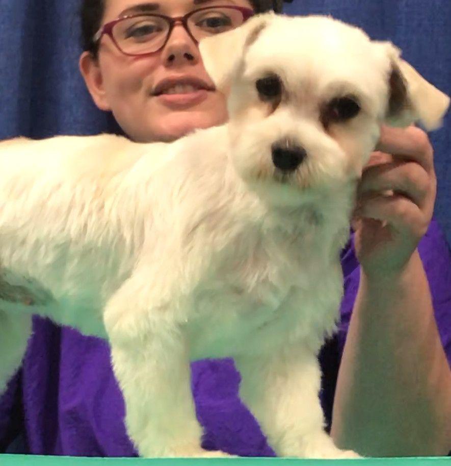 Adopt Ana On Low Energy Dogs Dog Adoption Dogs