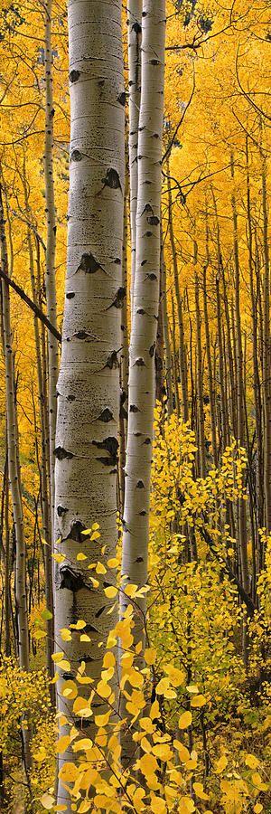 ~Autumn~ Aspen Intimacy