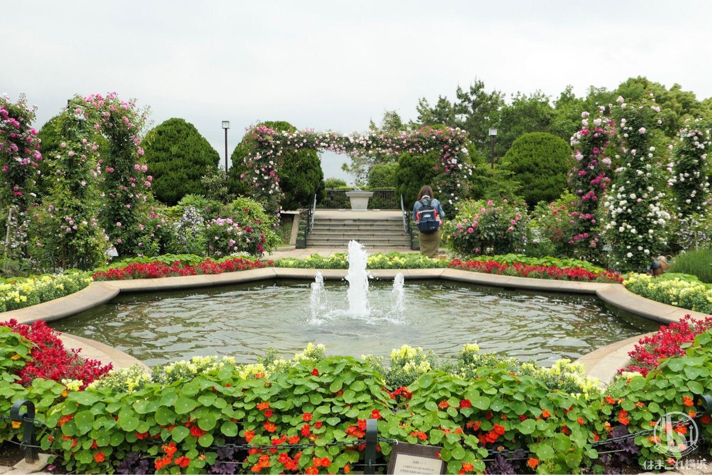 2018年 港の見える丘公園のバラが見頃 ガーデンを染めるバラを撮っ