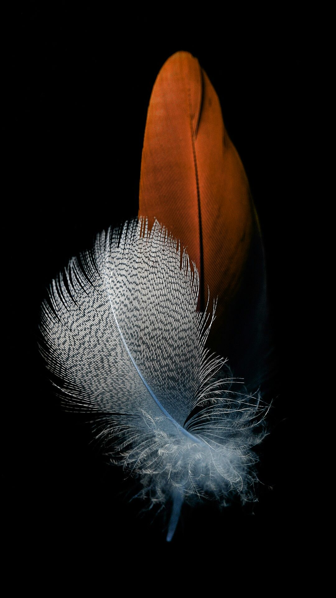 Huawei P8 Lite Feather Wallpapers Wallpaper Wallpaper Iphone