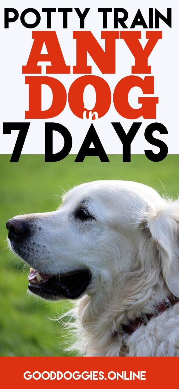 How To Potty Train Your Dog In 7 Days Or Less Help 4 Pups Dog