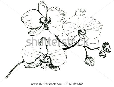 Yellow Orchid Drawing Pesquisa Google Flower Line Drawings Orchid Drawing Drawings
