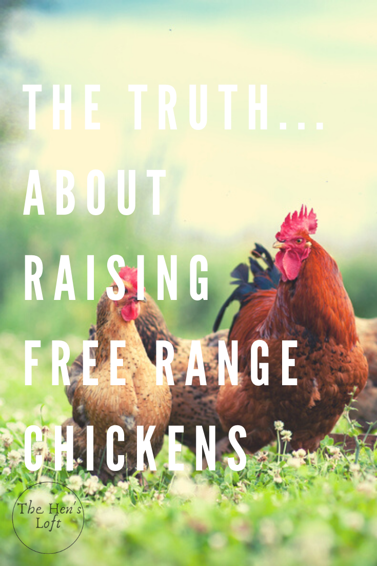 Advantages (And Disadvantages) Of Free Range Chicken ...