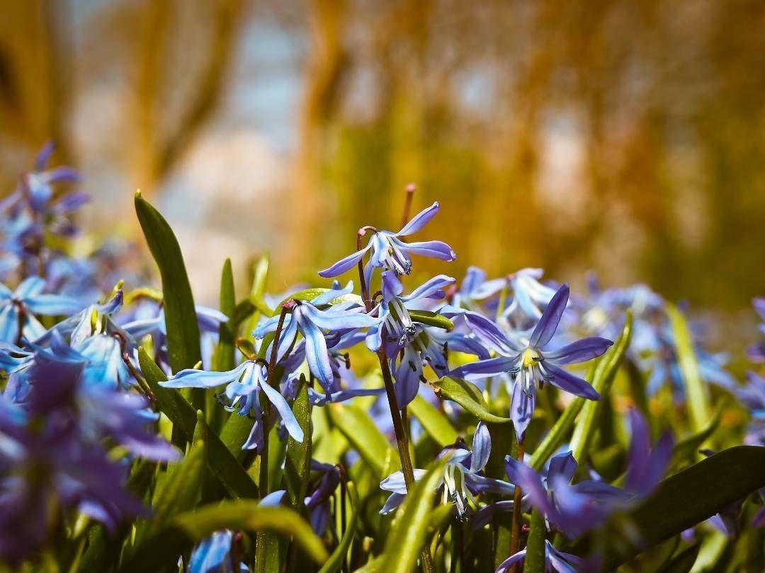 Bluebell flowers blue butterfly orchid spanish hasenglöckchen