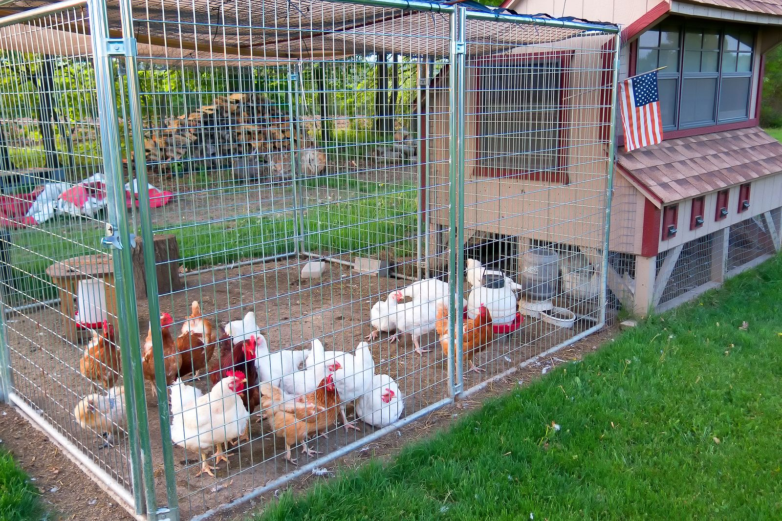 Small Chicken Coop And Fenced Area For Egg Laying Fowl Chickens Backyard Raising Backyard Chickens Chicken Coop
