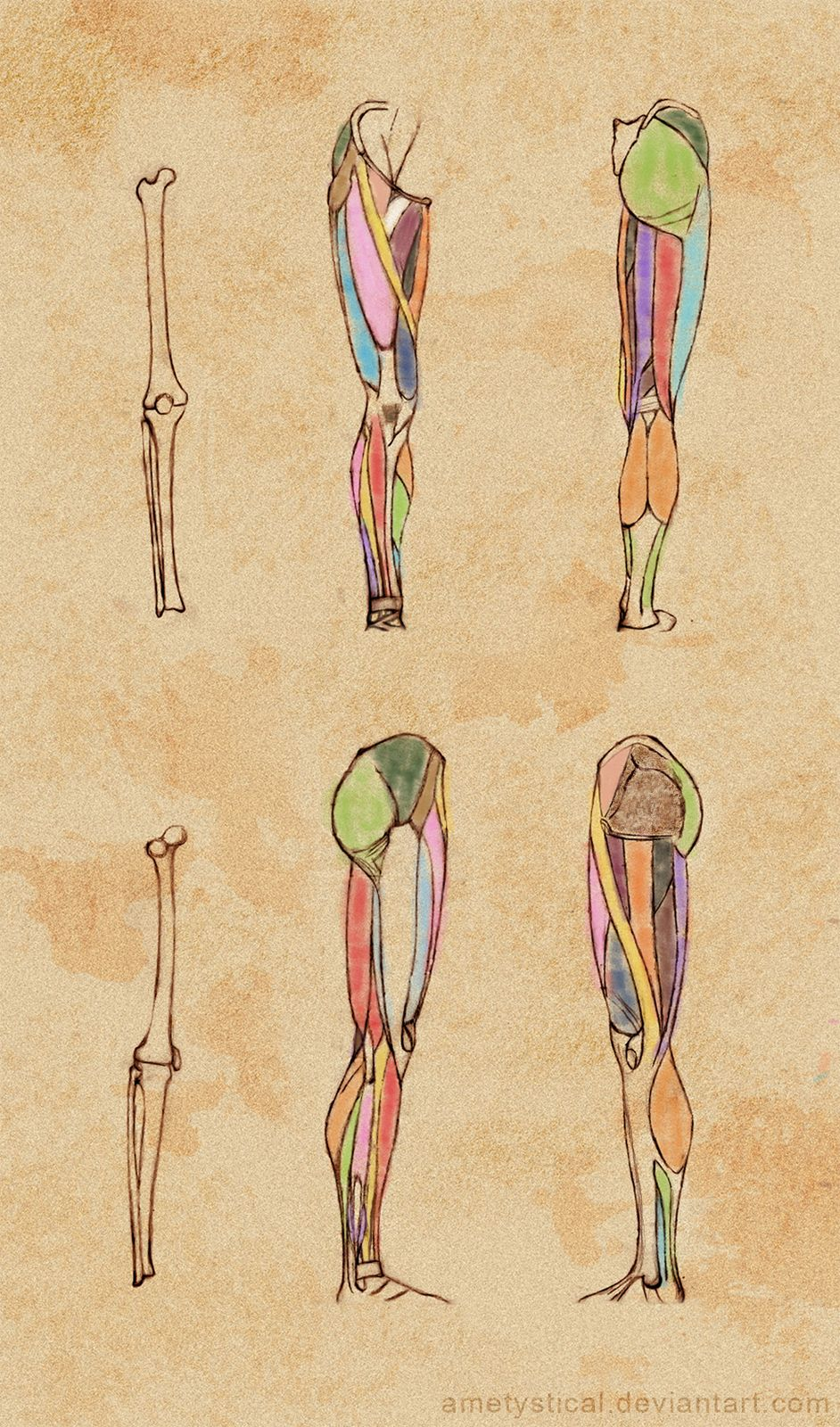 Right) Leg Study by Ametystical.deviantart.com on @DeviantArt ...